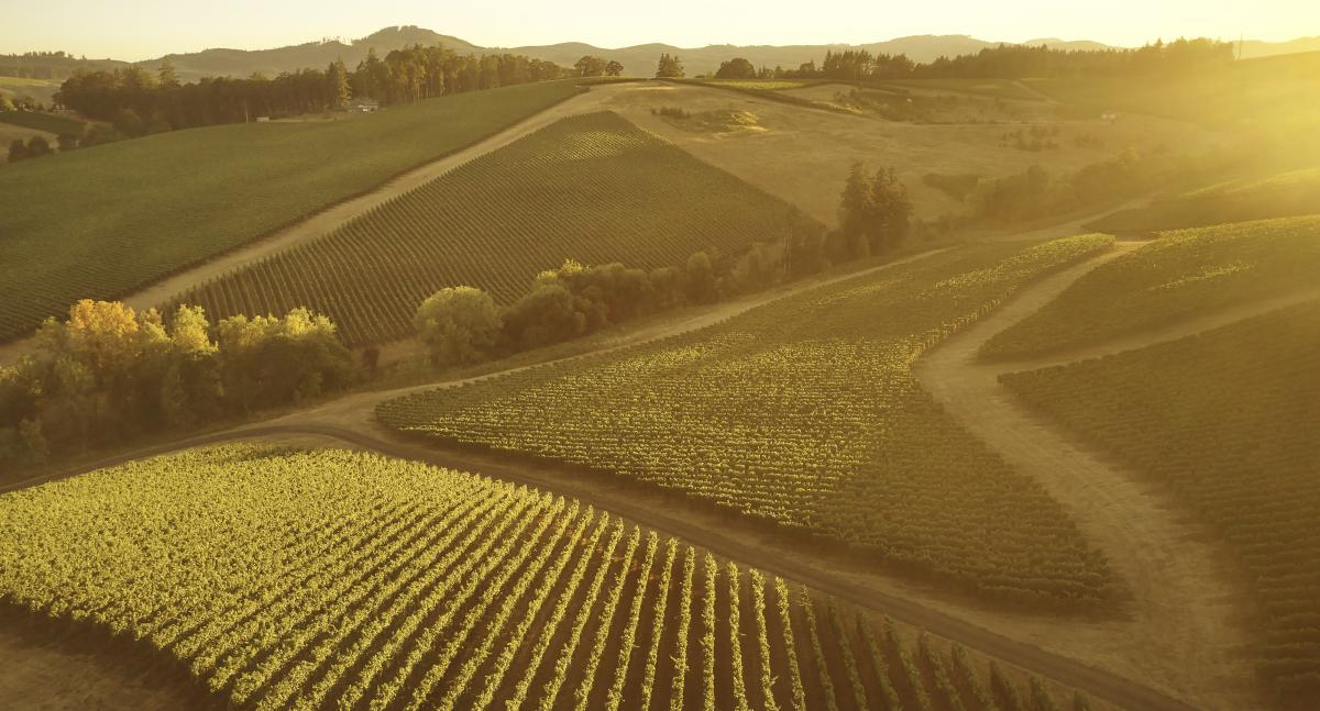 Gran Moraine vineyard from the air during sunset
