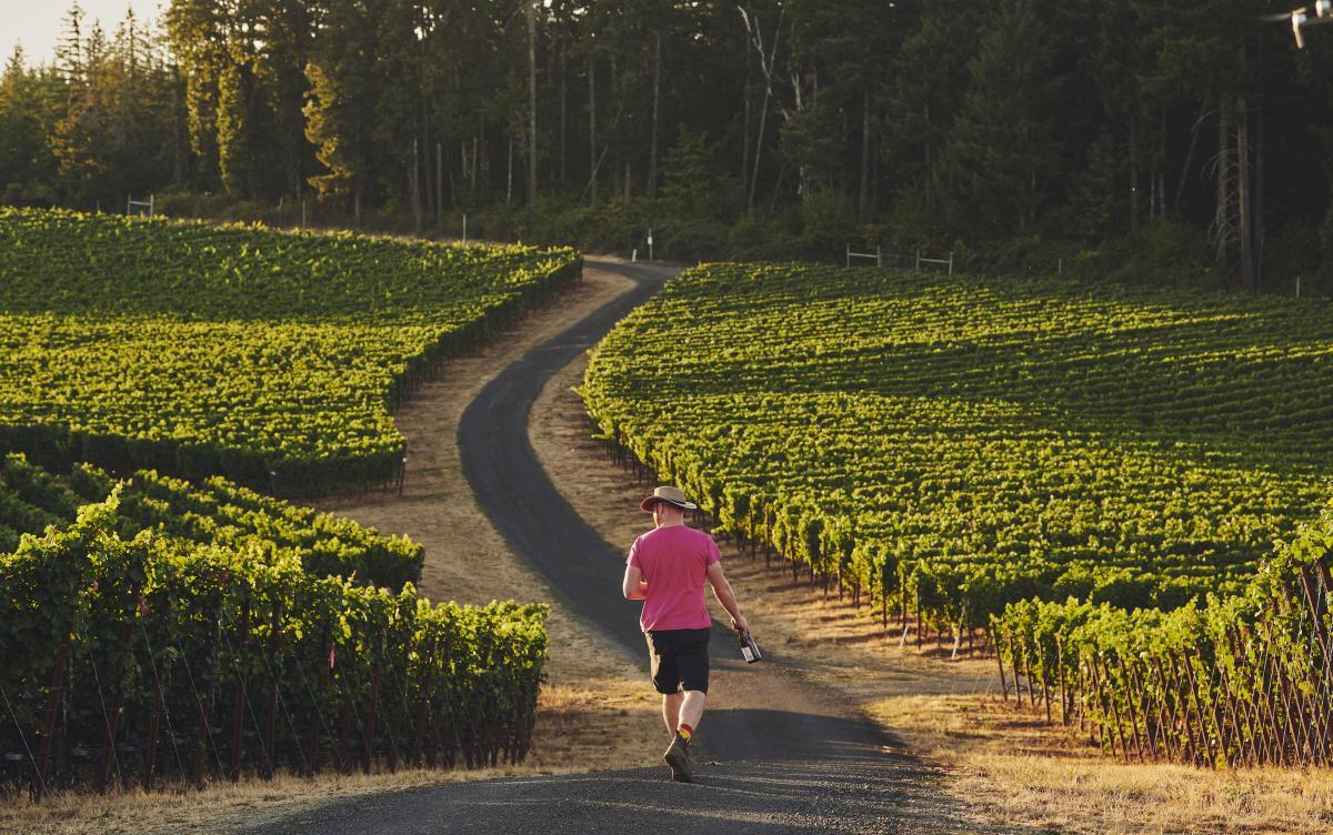 Man with a pink shirt walking through a vineyard holding a wine bottle